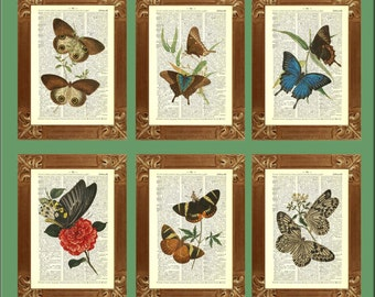 Butterflies Print, Set of 6 prints, vintage 1800 illustrations printed on old dictionary page, educational prints, country cottage decor