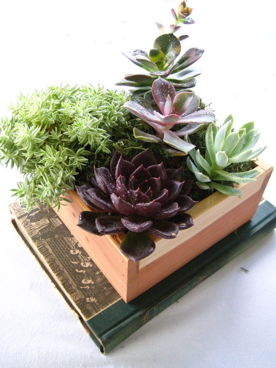 succulent Centerpiece Rustic Cedar Wood Planter Box Perfect Gift Centerpiece or Home Garden Decor