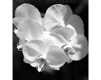 Just the Right Size Note Card - Orchids