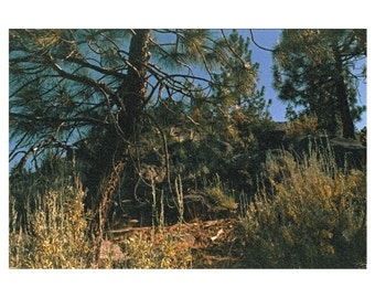 """Fine Art Photo Print, Limited Edition - Untitled, From the series: A Place to Stake, 2011 (11""""x14"""")"""