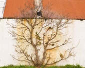 tree against shed - 8x10 fine art photograph