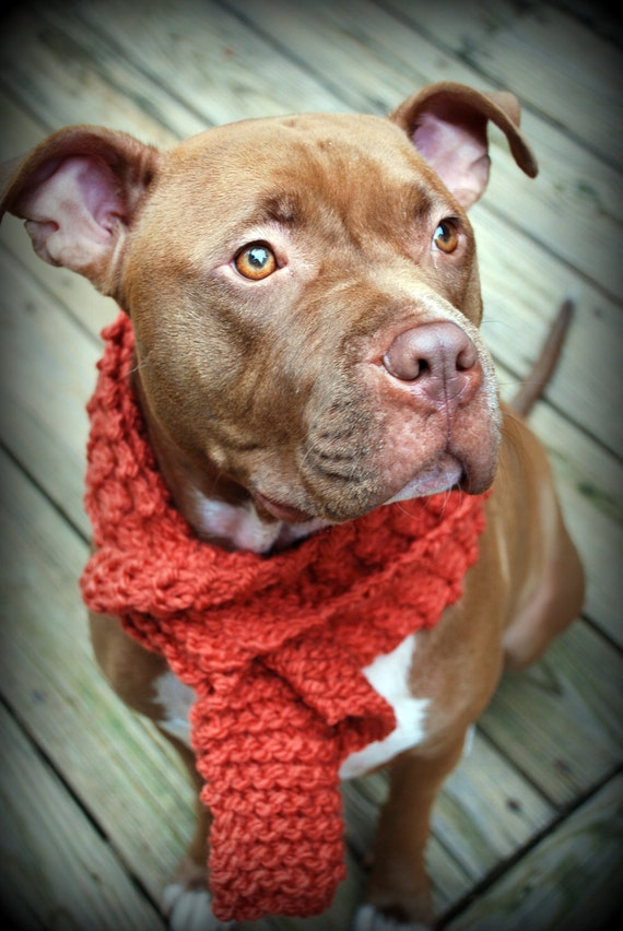 scarf orange knit for large breeds