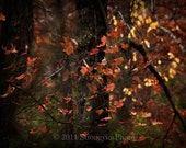 8x10 surreal nature photo, leaves, trees North Carolina Autumn photography StrongylosPhoto yellow orange rust golden