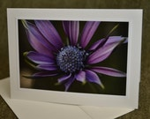 purple daisy photo, handmade card, eco friendly, rich purple flower, all occasion card
