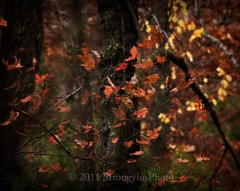 8x10 surreal nature photo, leaves, trees North Carolina Autumn photography StrongylosPhoto yellow orange rust golden