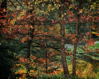 colors of fall, home or office decor nature 8x12 photography trees in Autumn Asheville North Carolina looks like Monet