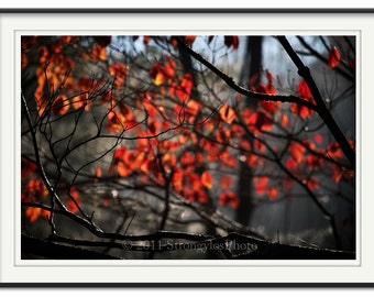 Autumn Leaves 8x12, and other sizes, photo, wall art, leaves on tree, autumn fall colors orange bronze