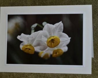 white daffodils in rain photo, handmade card, eco friendly, flower photography, all occasion card
