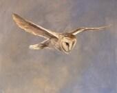 Soft Owl - Barn Owl Card
