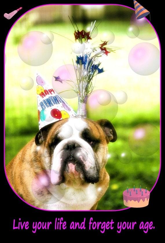 5x7 English Bulldog Birthday Card By Snowy4052002 On Etsy
