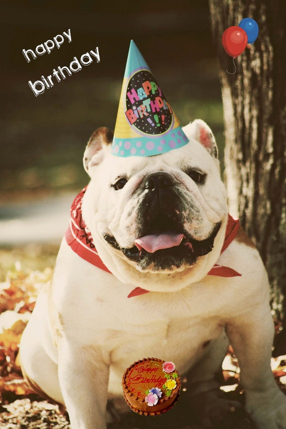 5x7 English Bulldog Happy Birthday Card
