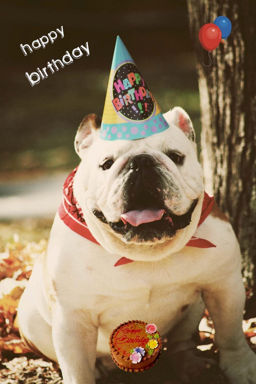 5x7 English Bulldog Happy Birthday Card