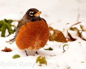 Fattened Up for Winter Fine Art Photography Print 8x10