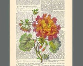 Botanical.  ARTWORK on page from antique book of poems