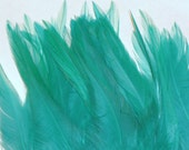 5 Turquoise Hackle Feathers for Crafts or Hair Extensions- 10