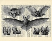 Bat Anatomy Dictionary art vintage anatomical flying on Upcycled Vintage Dictionary Paper - 7.75x11 under 20