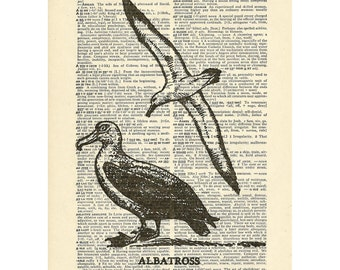 Albatross Bird Dictionary art flying seabird Printed on Upcycled Vintage Dictionary Paper - 7.75x11