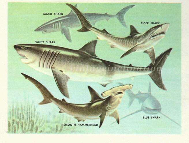 Baby shark party  Etsy