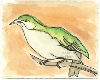 Watercolor Bird Drawing of a Hawaiian Akikiki Bird