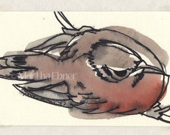 Watercolor Bird Drawing of Bird from Above