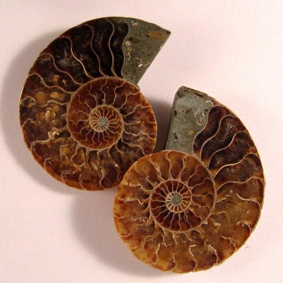 AWESOME Pair Ammonite Fossil Split Pair Approx. 53mm x 42mm  ETAMMPair010