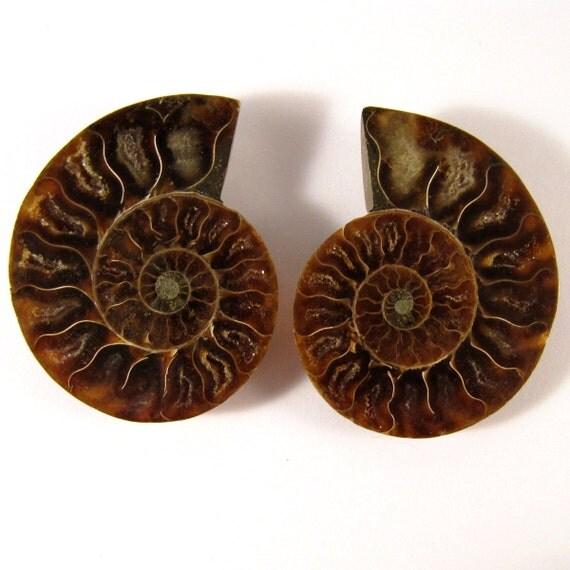 Beautiful Pair Ammonite Fossil Split Pair Approx. 54mm x 43.5mm  ETAMMPair011