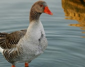 Checkbook Covers - Ducks