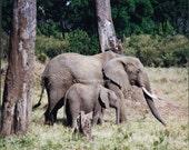 15% OFF... Coupon Code is  ENJOY 2013 ..Elephants Big FIVE  8 x 10 inch Print African Wildlife Photograph