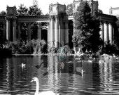 "Spring Swan // 8""x12"" Print"