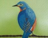 Blue Bird on a Wire