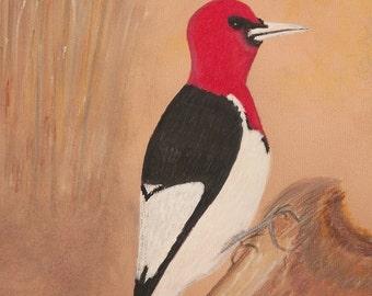Red Headed Wood Pecker on Tree Stump - Print