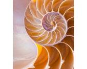 Nautilus Wave - photograph 8x10