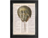 The Horseshoe Crab - Ocean Life -  Print on Vintage Dictionary Paper - 8x10.5