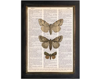 A Collection of 3 Tan Moths - printed on Upcycled Vintage Dictionary Paper - 8x10.5
