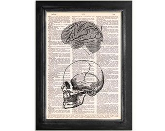 Skull & Anatomy of The Human Brain - Printed on Upcycled Vintage Dictionary Paper - 8x10.5