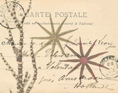 Vintage French Postcard Collage with Starfish Natural History Art Print 8 x 10