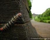 Fine Art Photography - Caterpillar admires Borobudur Temple, Indonesia