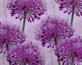 Allium Gift Wrap - great for scrapbooking, crafting or just wrapping presents
