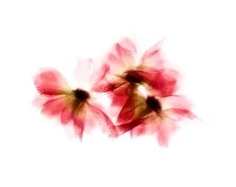 "Orange Floral Art Print - Flora Impressions - ""Orange Anemones"" 8x8 inch"