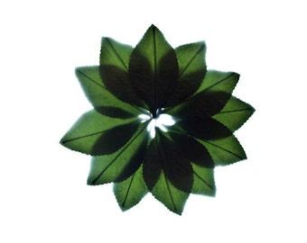 "Green Botanical Art Print - Flora Impressions - ""Leaf Fan"" 8x8 inches"