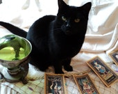 PSYCHIC KITTEH answers 5 questions