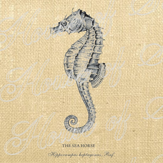 Seahorse Fish Ocean Sea Antique Vintage Download Graphic Image Art Transfer burlap tote tea towels Pillow French Gift Tag Digital Sheet 1076