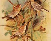 Vintage Silk Painting - Birds on Branches - Hand Painted Original - Very Fine Detail