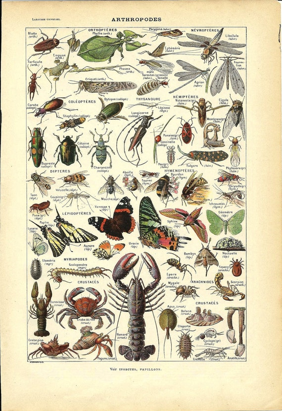 1922 - Poster - ARTHROPOD - French Dictionary Color Illustration