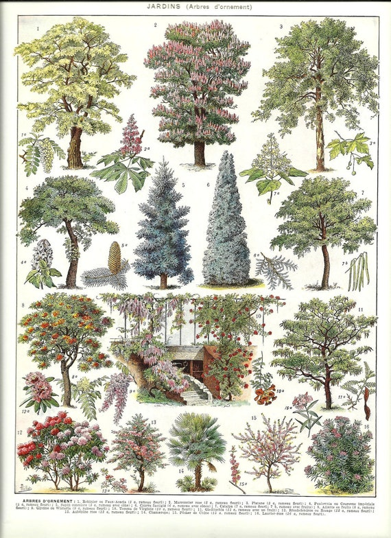 Vintage ORNAMENTAL TREES - Vintage french dictionary print - 1930