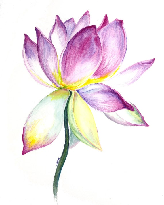 Lotus flower watercolor painting - Fleur paint ...