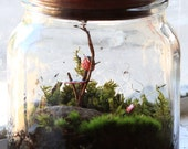 Middle of Nowhere - Living Terrarium and Miniature Sculpture