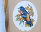 "Vintage Song Bird Art, Framed Robin Hill Audubon Baltimore Oriole ""Songbirds of the World"" 1980 Franklin Mint Collectible"
