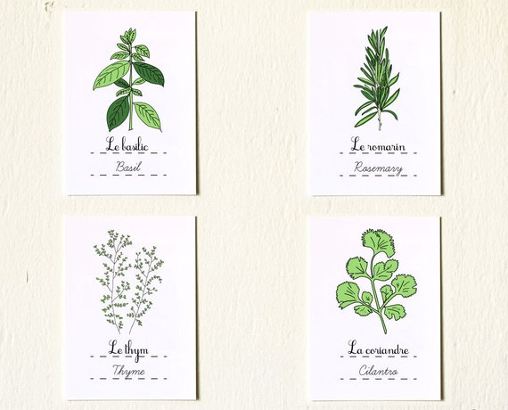 Kitchen Art Prints 'Herbs' set of 4 5x7 giclee art prints Basil Rosemary Cilantro Thyme Retro Green