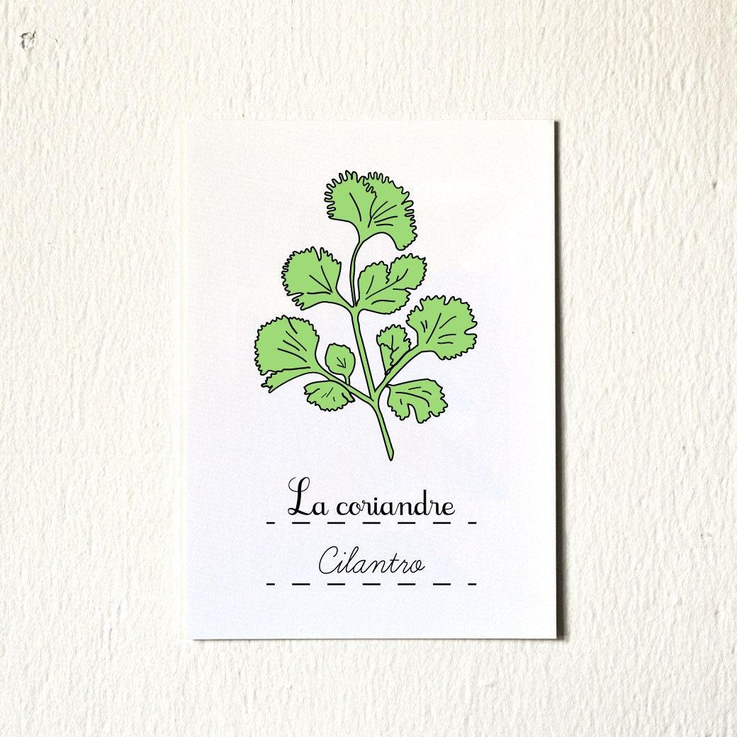 green home decor eco kitchen art herbs art print 5 x 7